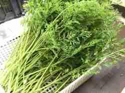 うさぎ,野菜,うさぎ畑,