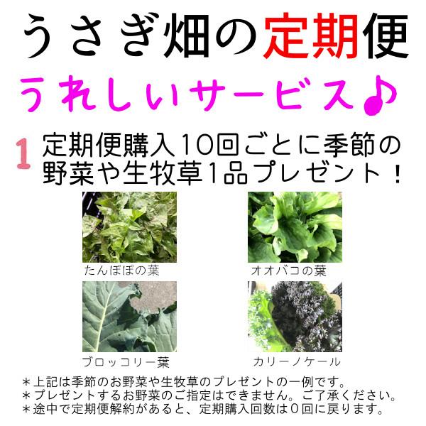 にんじん葉,うさぎ,生牧草